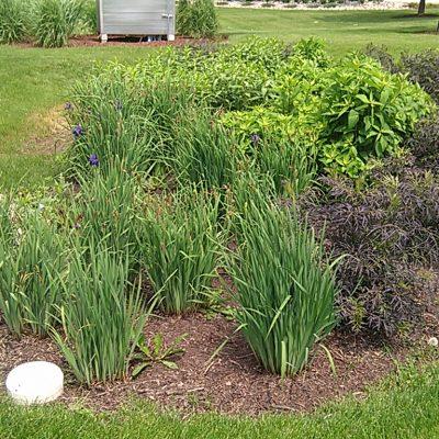 Engineered Soil Biorention
